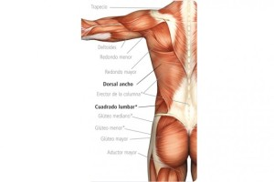 anatomia-corte-lateral_thumb_e