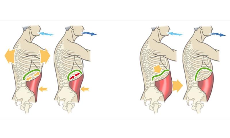 Cómo Controlar La Ansiedad La Respiración Abdominal: Respiracion-abdominal-diafragmatica