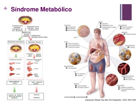 comparacin-de-diferentes-dietas-sobre-los-parmetros-del-sndrome-metablico-3-638